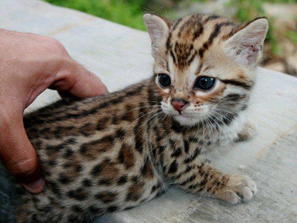 fluffy-kittens
